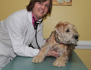 Old Dominion Vet >> When Should I Call The Vet Old Dominion Animal Hospital