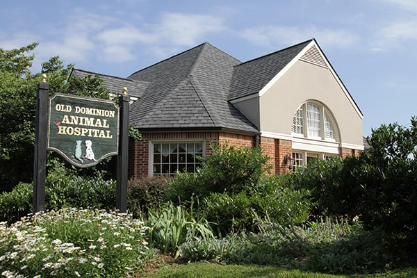 Old Dominion Vet >> Old Dominion Animal Hospital Proudly Serving