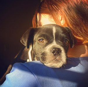 Top reasons to neuter your dog