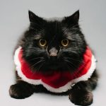 Holiday Pet Portraits 2016