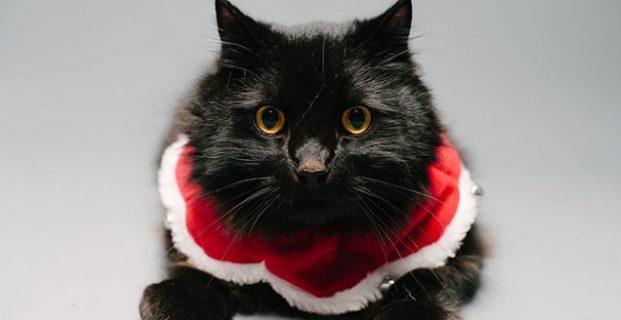 Holiday Pet Portraits 2016