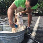 Dog Wash 2016