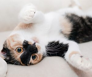 5 Tips for happy cats