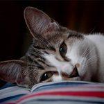 Cat Nap-tastic