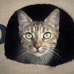 Strange Cat Behaviors Explained