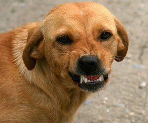 My Dog Bit Me - What do I do?
