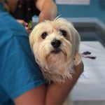 5 Simple First Aid Tricks Every Pet Owner Should Know