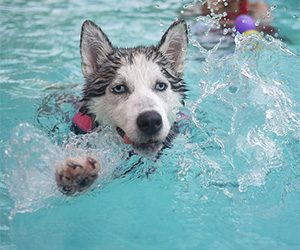 Dog Swimming Tips