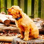 If Dogs Could Talk… 6 Myths They'd Debunk