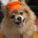 Halloween Pet Protection Guide: Minimizing the Risk So Everyone Can Have Fun