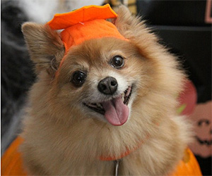 Halloween Pet Protection Guide