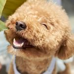 5 Ways to Help Make Your Dog Happier