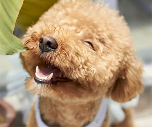 5 Ways to Help Make Your Dog Happier