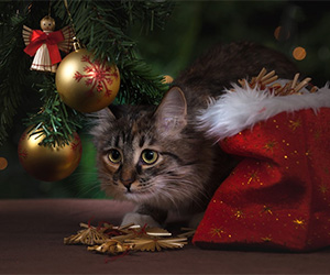 Posing Pets for Holiday Pictures