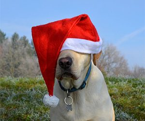 10 Holiday Pet Dangers