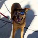 Avoid Canine Heatstroke