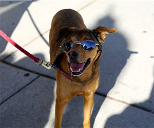Protect Your Dog from Summer Heatstroke