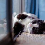 9 Secrets to Keeping Your Indoor Cat Happy