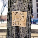 What Should You Do When You Find a Lost Pet?