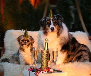 New Years Resolutions for your dog