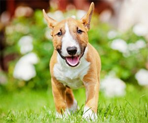 Pet Adoption Websites