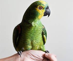 Tips for Owing Exotic Pets