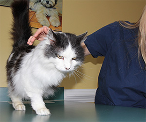 How To Tell If Your Cat Is Sick 7 Symptoms To Watch Out For Old Dominion Animal Hospital