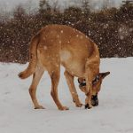 Tips to Help Your Dog to Potty in the Snow
