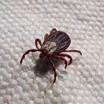 Farewell to Fleas & Ticks