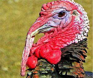 10 Turkey Facts