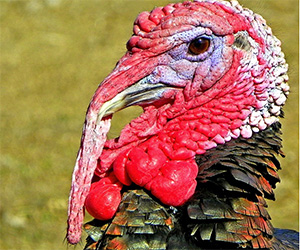 10 Turkey Facts