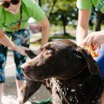 Dog Wash 2017