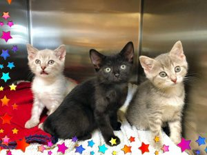 Cat Action Team Feline Rescue at Old Dominion Animal Hospital