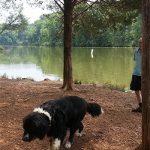 Chris Greene Lake Algae Alert