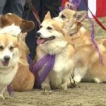 34th Eastminster Dog Show