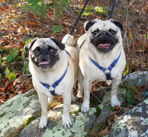 Hiking in Charlottesville with your Dog