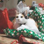 Christmas Crazy Cats