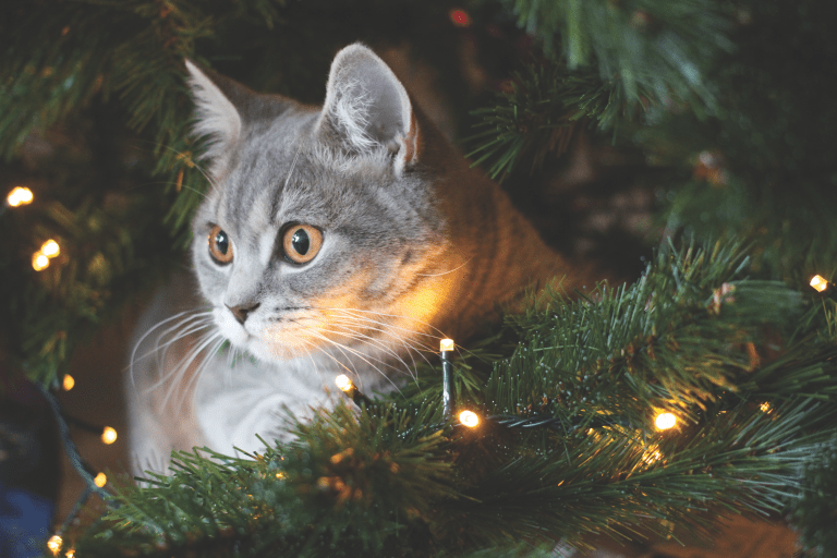 Cat Safety During the Holidays