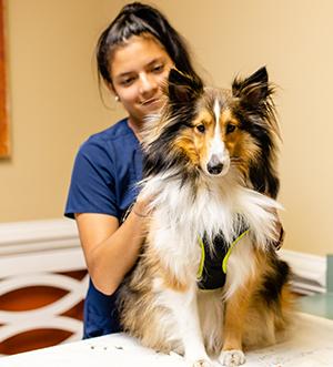 Referrer your veterinarian