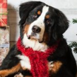 Holiday Photos at Animal Connection