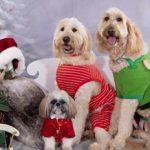 Santa Paws Photos & Holiday Bazaar