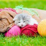 Spring at SPCA Rummage