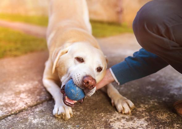 Animal Behaviorists