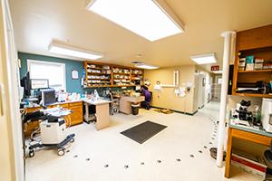 Veterinary treatment