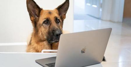 Pet-Friendly Virtual Events